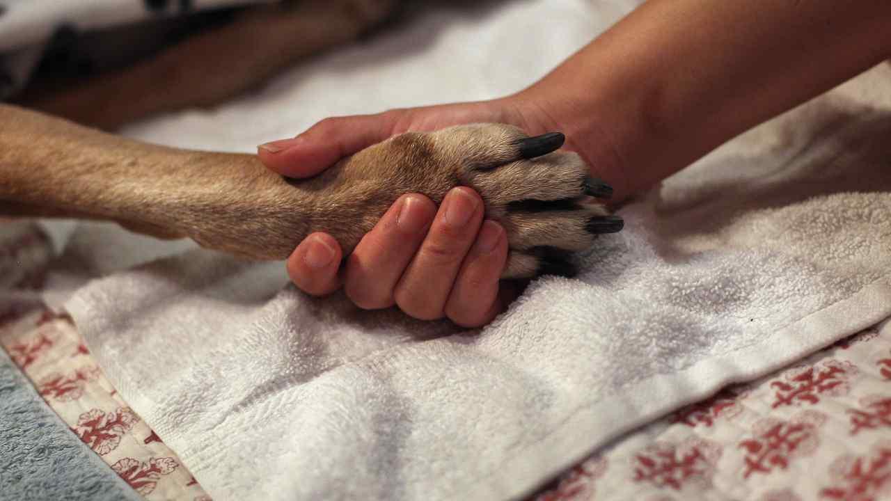"""Salerno, quindici cani randagi trovati morti: """"Gesto di vigliaccheria"""""""