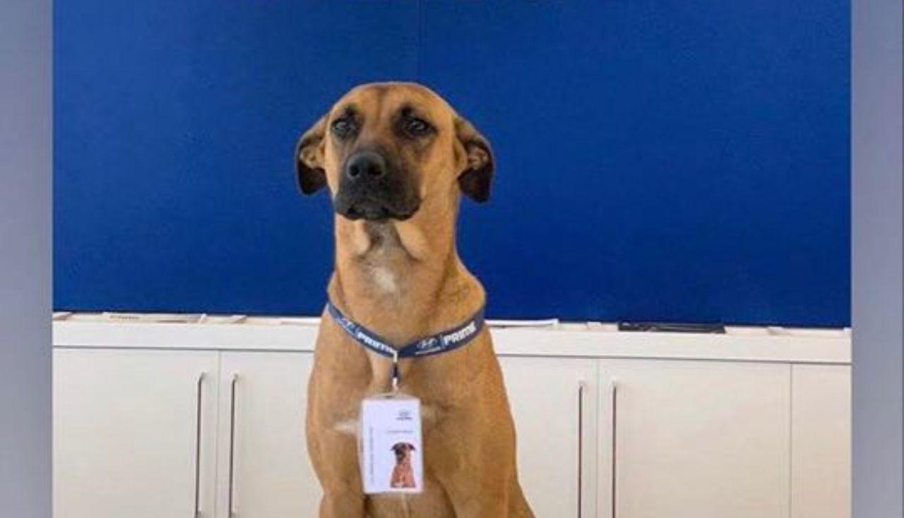 Tucson Prime: il primo cane che vende automobili