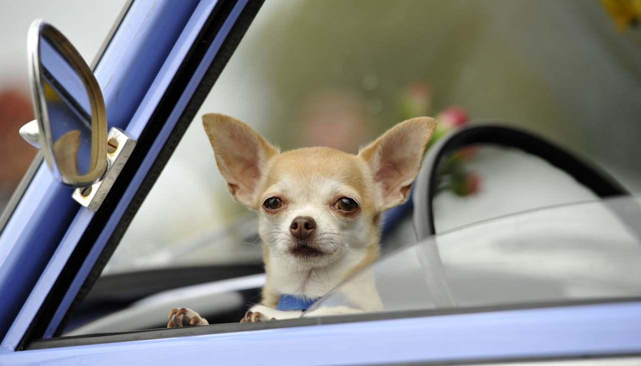 Viaggiare con cane o gatto: ecco la guida OIPA