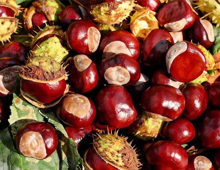 castagne da conservare fresche