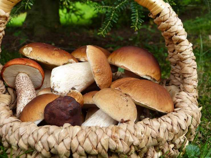 funghi misti per budino