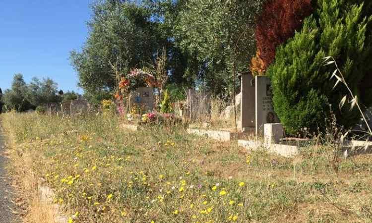 Cimitero Morti Cartello Roma