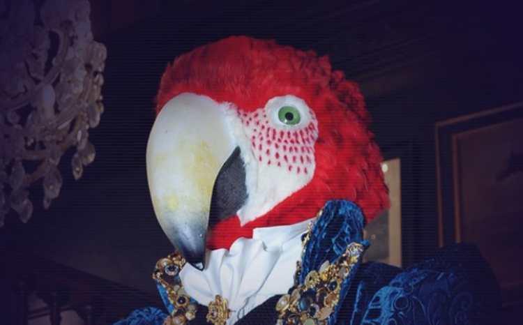 pappagallo il cantante mascherato