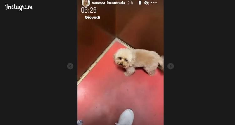 cane Vanessa Incontrada in ascensore