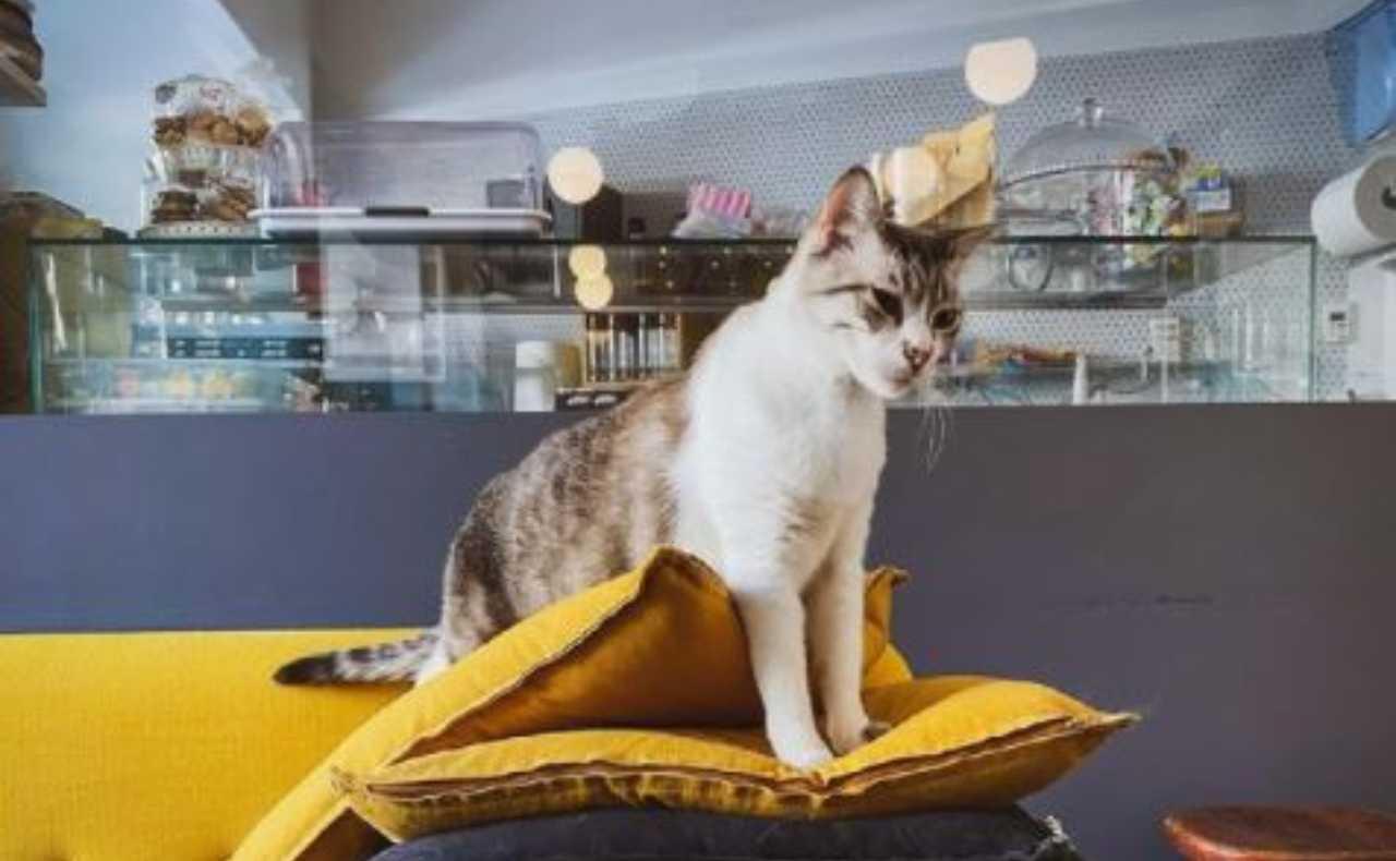 Crazy Cat Cafè polemica social